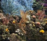 珊瑚礁underea 库存图片