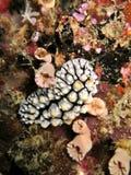 珊瑚种植礁石 库存照片