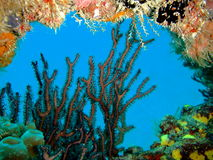 珊瑚窗口 免版税库存图片