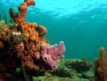 珊瑚紫色海绵 免版税库存照片