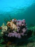 珊瑚紫色 免版税库存图片