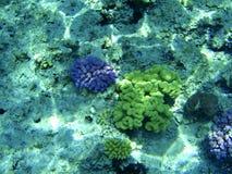 珊瑚红海 库存图片