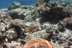 12 17 2007珊瑚红色场面海运射击 库存图片