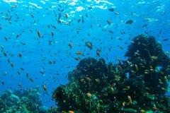 珊瑚红色礁石海运 背景 免版税库存照片