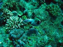 珊瑚红色礁石海运 背景 库存照片
