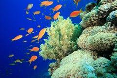 珊瑚红色礁石海运 免版税库存图片