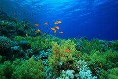 珊瑚红色礁石海运 免版税图库摄影