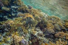 珊瑚红色礁石海运 免版税库存照片