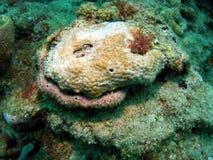 珊瑚表面 库存照片