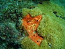 珊瑚表面 库存图片