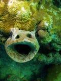 珊瑚表面 免版税库存图片