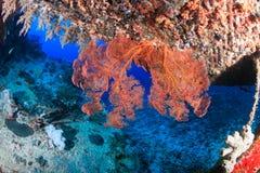 珊瑚被复的海难 免版税库存图片