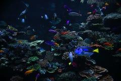 珊瑚钓鱼热带的礁石 免版税库存照片