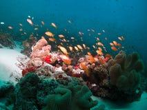 珊瑚钓鱼礁石 库存图片