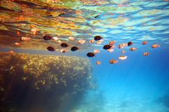 珊瑚钓鱼礁石 免版税图库摄影