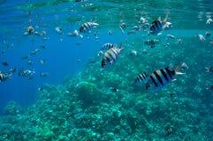 珊瑚钓鱼红色礁石海运 免版税库存图片
