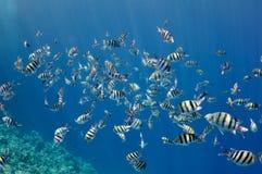 珊瑚钓鱼红色礁石海运 免版税库存照片