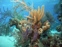 珊瑚题头 库存图片