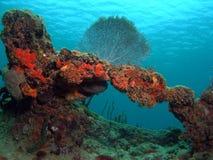 珊瑚风扇礁石 免版税库存照片