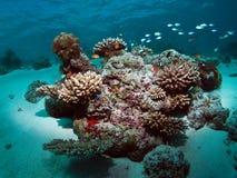 珊瑚马尔代夫礁石 免版税图库摄影