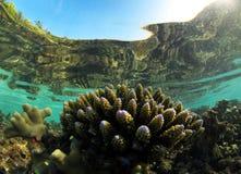 珊瑚马尔代夫视窗 免版税库存图片