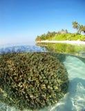 珊瑚马尔代夫 免版税库存照片