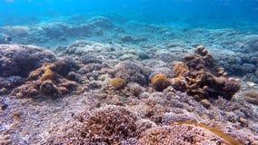 珊瑚鱼在印度洋,巴厘岛,印度尼西亚 影视素材