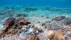 珊瑚鱼在印度洋,巴厘岛,印度尼西亚 股票录像