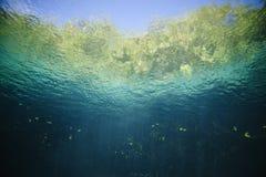 珊瑚鱼横向礁石热带水中 图库摄影