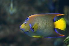 珊瑚鱼氖 库存图片