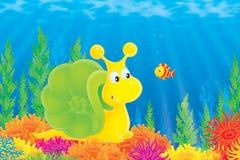 珊瑚鱼海洋蜗牛 库存图片