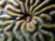 珊瑚鱼钻孔热带 图库摄影