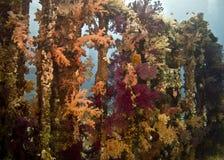 珊瑚鱼 免版税图库摄影