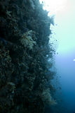 珊瑚鱼 免版税库存图片