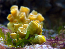 珊瑚黄色 免版税库存照片
