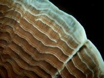 珊瑚11,王侯Ampat,印度尼西亚 图库摄影