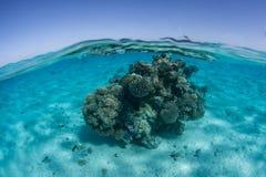 珊瑚Bommie在和平的盐水湖 免版税库存照片