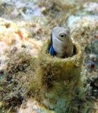 珊瑚eilat钓鱼礁石s 免版税库存图片