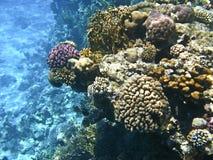 珊瑚el红色礁石海运sharm回教族长 免版税库存图片