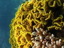 珊瑚labirint 免版税图库摄影