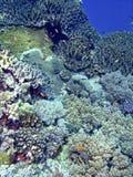 珊瑚layang礁石 图库摄影