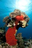 珊瑚pinnicle礁石 免版税图库摄影