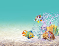 珊瑚rif 免版税图库摄影