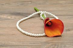 珍珠串与lilly一个黄色海芋属植物的 库存照片