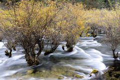 珍珠在九寨沟的浅滩瀑布,四川,中国风景  库存照片