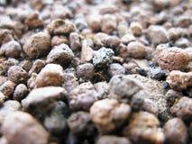 珍珠岩 库存图片