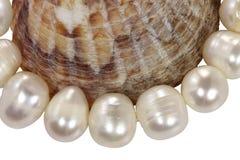 从珍珠的宏观项链和在一空白backgr的软体动物壳 免版税库存图片