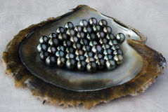黑珍珠 免版税库存图片