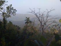 珠穆朗玛峰帕尔瓦特帕哈德绿色花树kahani女孩男孩孩子 免版税图库摄影