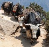 去珠穆琅玛营地的牦牛有蓬卡车  免版税库存图片